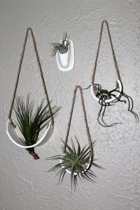DIY air plant holders in bathroom | diy crafts | Pinterest ...