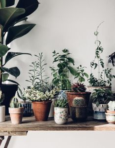 Beautiful inspiration for plant loving folk my scandinavian home also sells  unique range of homewares that are hand crafted rh pinterest