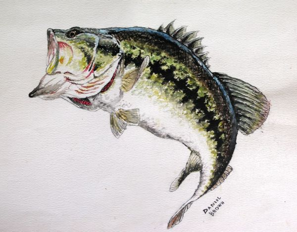 20 Bass Art Pictures And Ideas On Stem Education Caucus