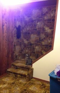 Cats Climbing Carpet Wall. AMAZING.... Lucky Kitteh's ...
