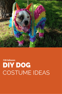 Isn't this Pinata Dog Outfit cute and original? What a FUN