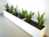 Large Indoor Plant Pots Melbourne | Indoor Planters ...
