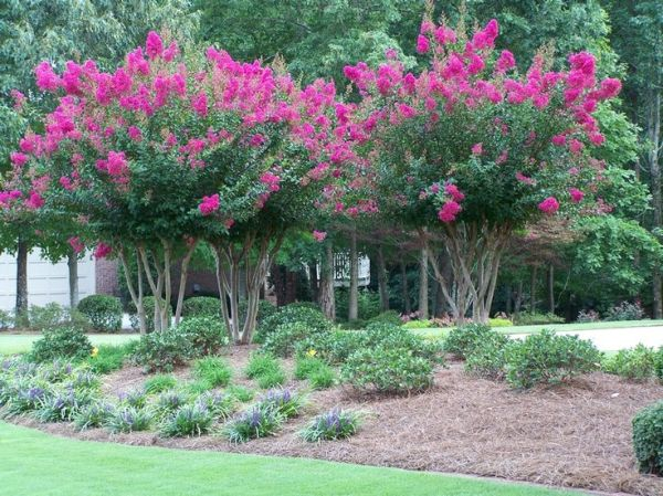 crape myrtle landscaping ideas