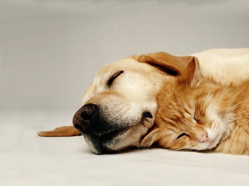 cat and dog wallpapers wallpaper | hd wallpapers | pinterest | dog