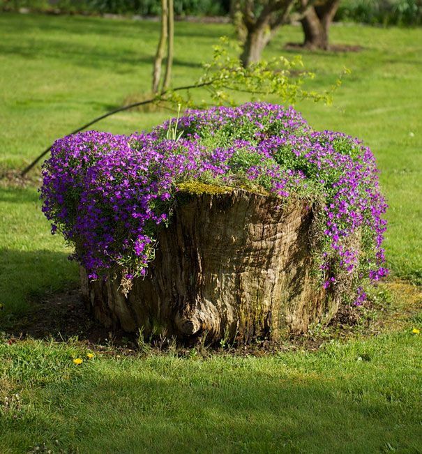 25 Old Tree Stumps Turned Into Beautiful Flower Planters