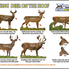 Whitetail Deer Shot Placement Diagram Wiring For 1986 Chevy Truck Updates To Our Almost Famous Aging On The Hoof Poster