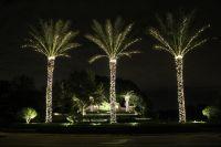 Lights On Medjool Date Palms Winter in Vegas | Christmas ...