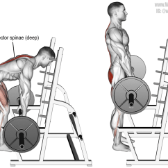 Pull Up Muscles Worked Diagram Cat5 Wiring Faceplate Barbell Rack A Major Back And Lower Body Compound