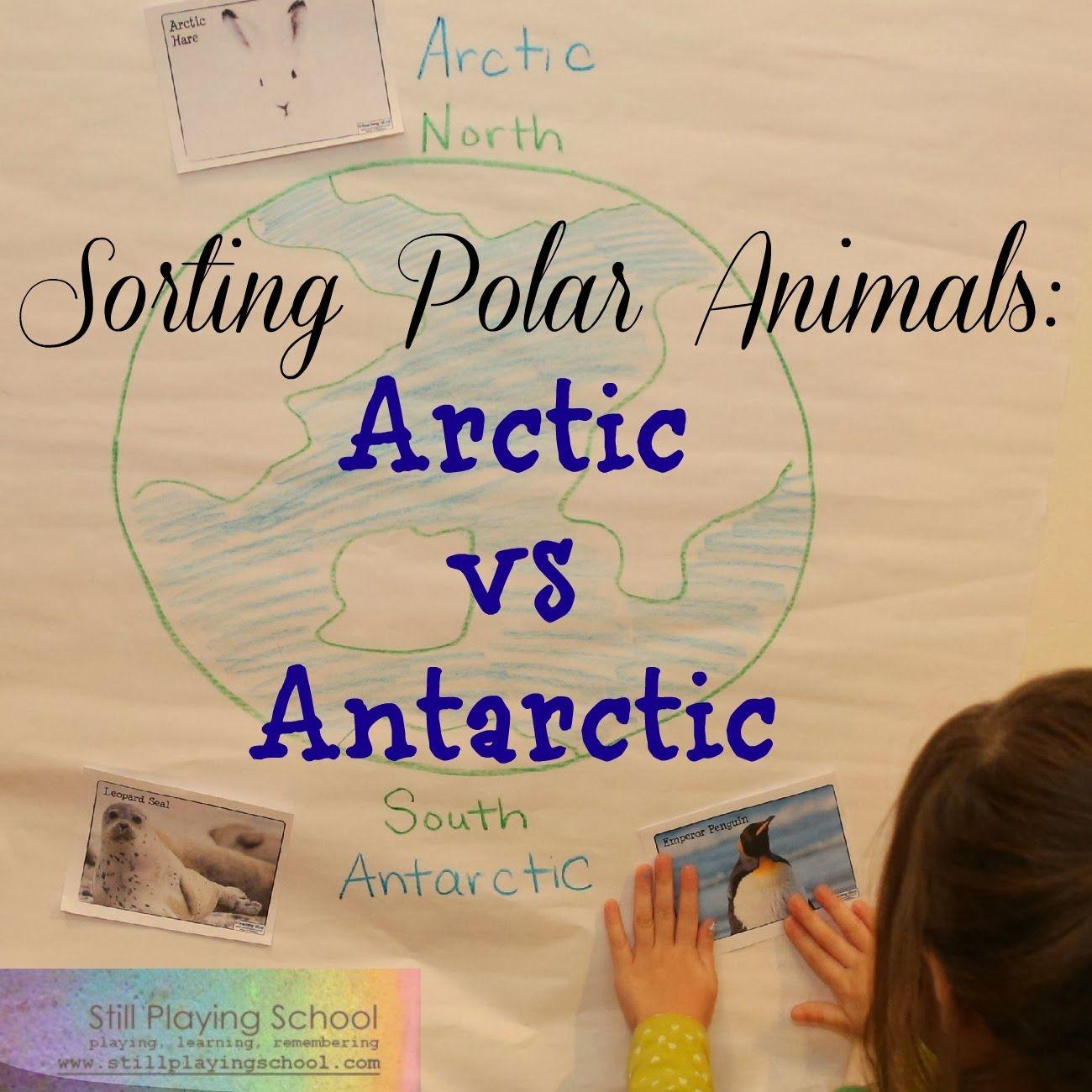 Polar Animal Sort Arctic Vs Antarctic