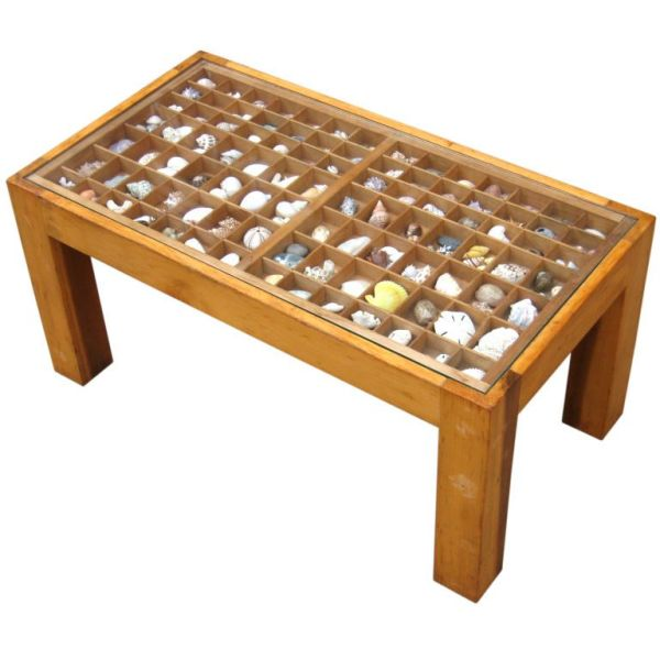 seashell collection coffee table