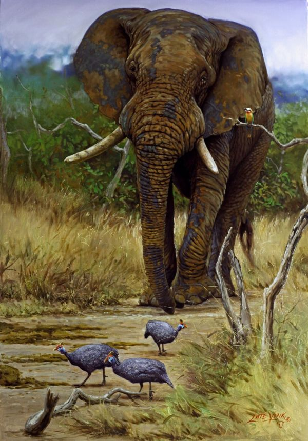 Paintings African Elephant Animals