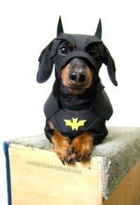 Dachshund Costume on Pinterest | Vintage Dachshund, Wiener ...