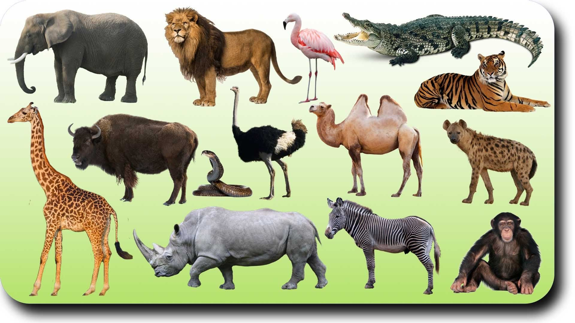 Learning Wild Animals Names And Sounds For Kids In English