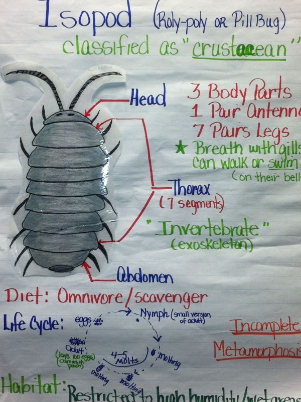 Rolly Polly Science Worksheets 5th Graders