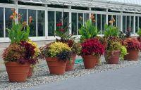 outdoor potted plant arrangements | Potted Plant ...
