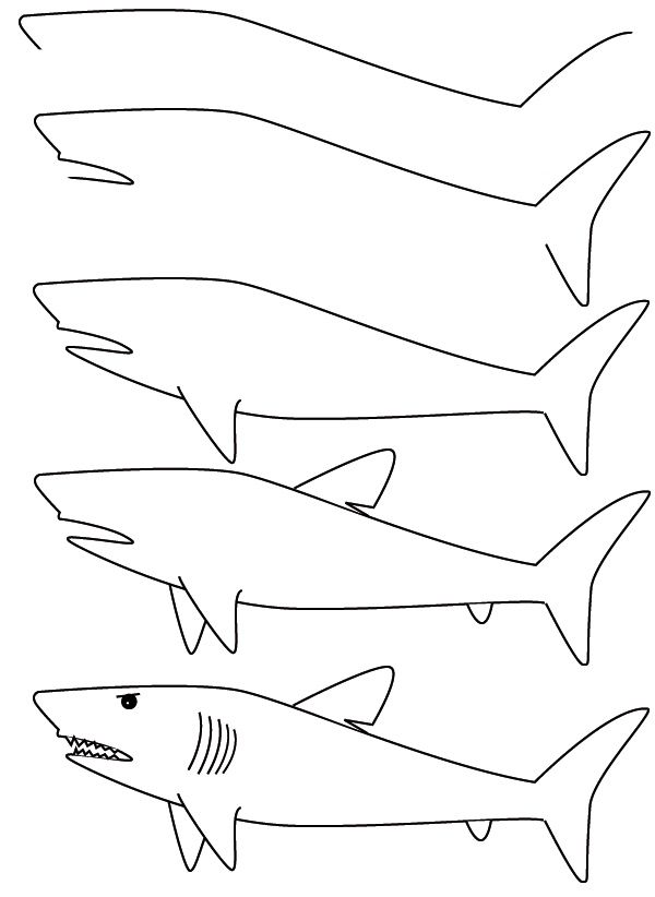 drawing a shark- finally easy directions for the boy who