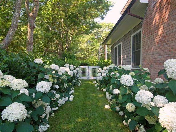 English Gardens English And Gardens On Pinterest