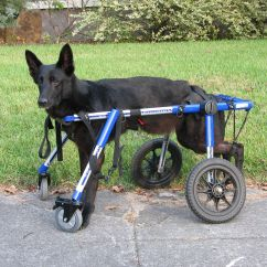 Wheelchair Quad Pub Style Table And Chairs Walkin 39 Wheels Dog With Front Attachment