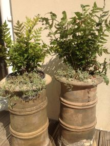 Chimney Pot Planters With Holly Fern And Cerastium