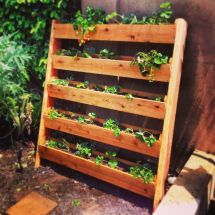 Built Vertical Strawberry Garden Of Cedar Fence