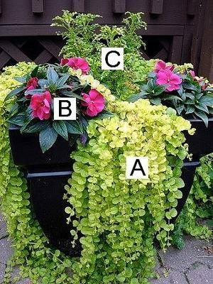 Container Flower Gardening Ideas Lots Of Different Flower Combos