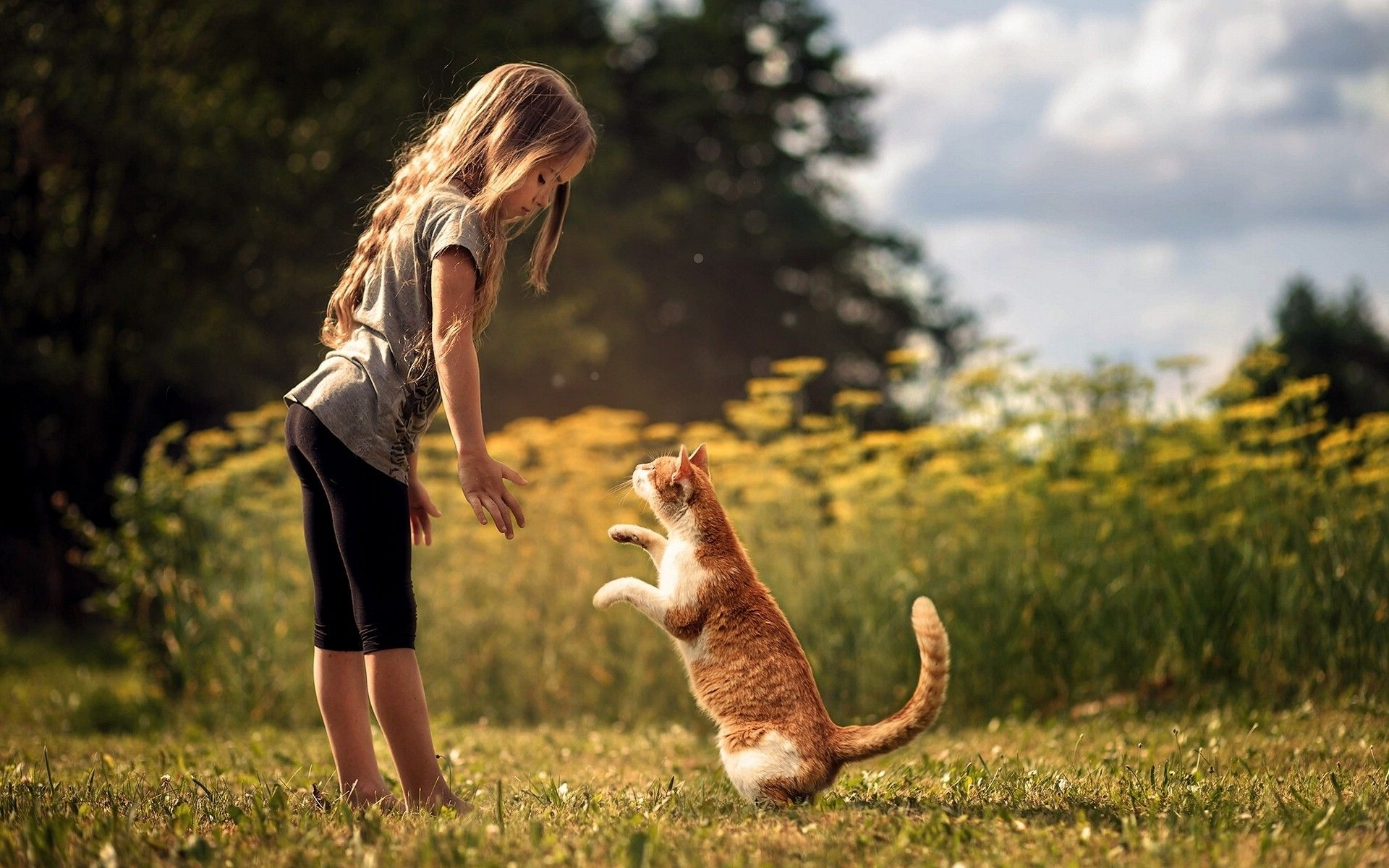little girl with dog in daytime hd wallpapers pixcorners