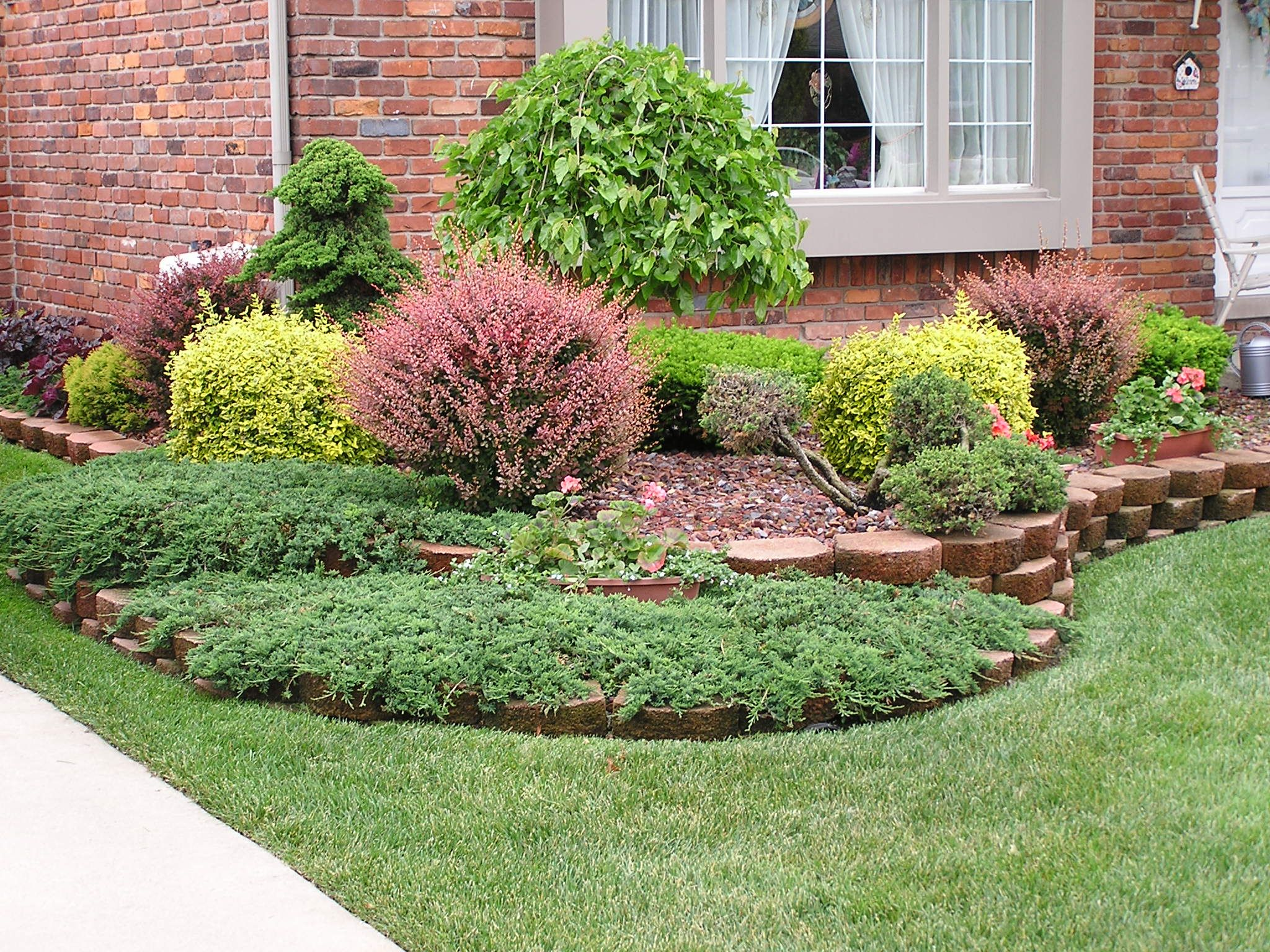 Colorful Shrubs And Bushes The Thorough Tree And Shrub Care