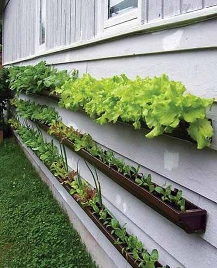 Unusual Planters for Backyard Decoration, 20 Spring