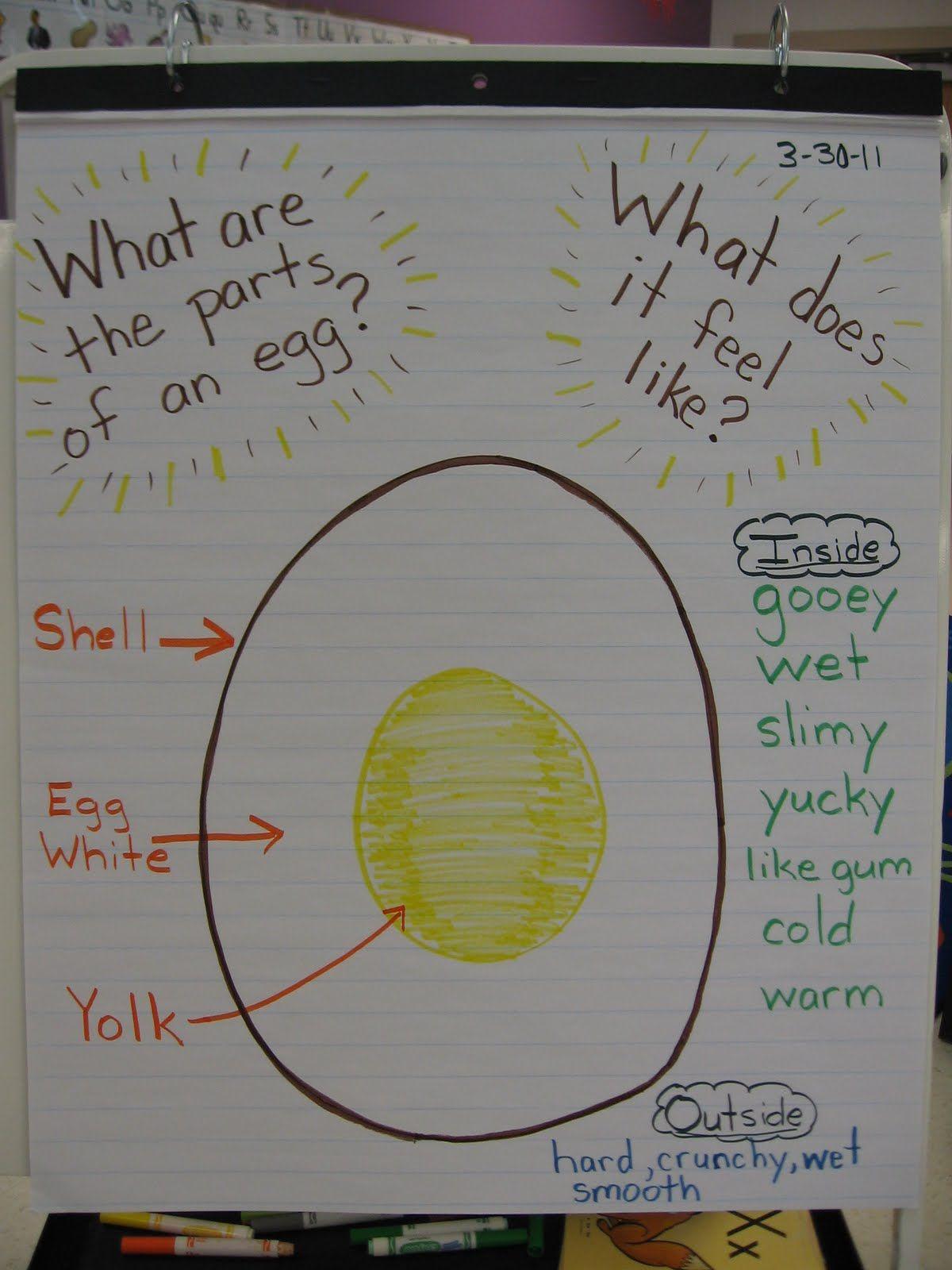 Parts Of An Egg Preschool