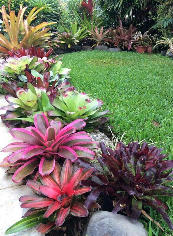 Bromeliads Make A Beautiful Lower Story Most Bromeliads Require