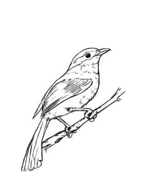 bird easy sketch