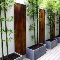 How To Grow A Bamboo Fence Design, Pictures, Remodel ...
