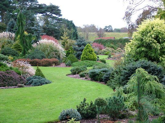 dwarf coniferous evergreen gardens