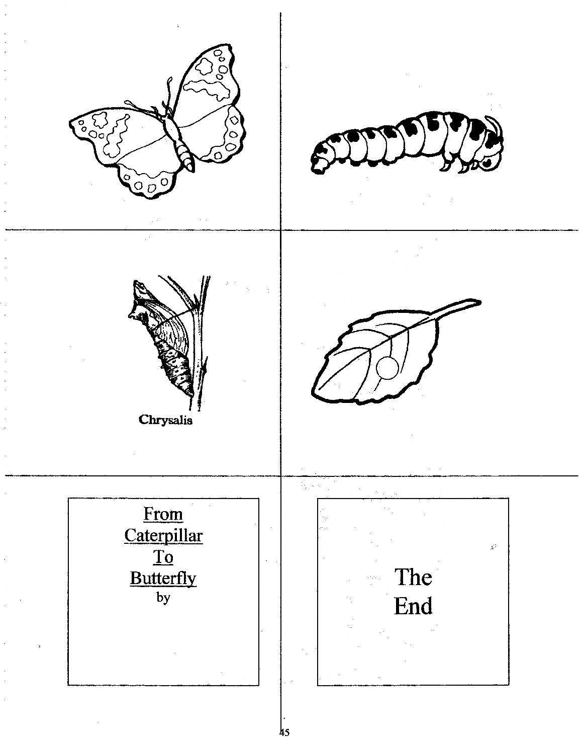 Erfly Sequencing Worksheet For Preschoolers Erfly Best Free Printable Worksheets