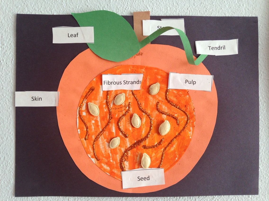 Parts Of A Pumpkin Pumpkin Study Pinterest
