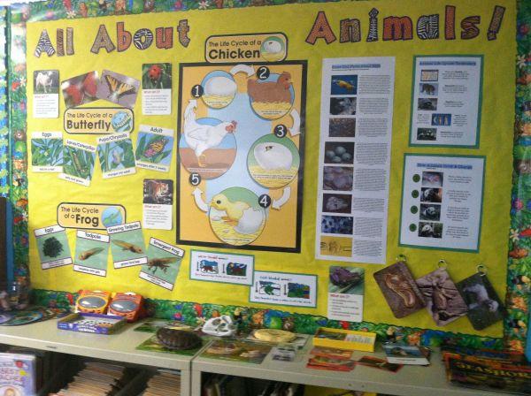 Animals - 2nd Grade Science Bulletin Board