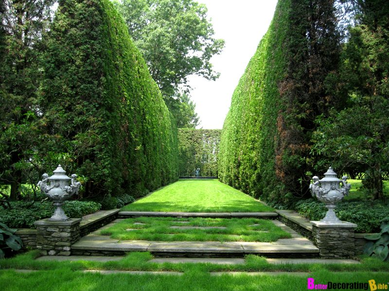 backyard privacy plants