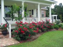 Knockout Roses Front Porch