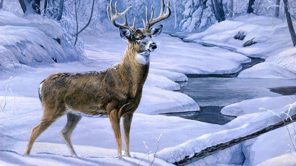 Hd Deer Hunting Wallpaper Animals