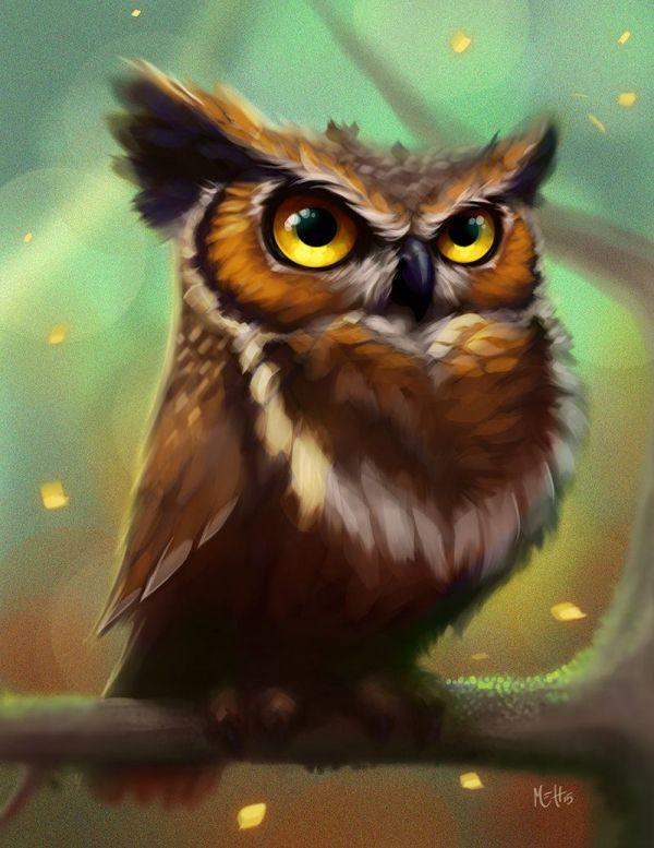 Owl Drawing Art Illustration
