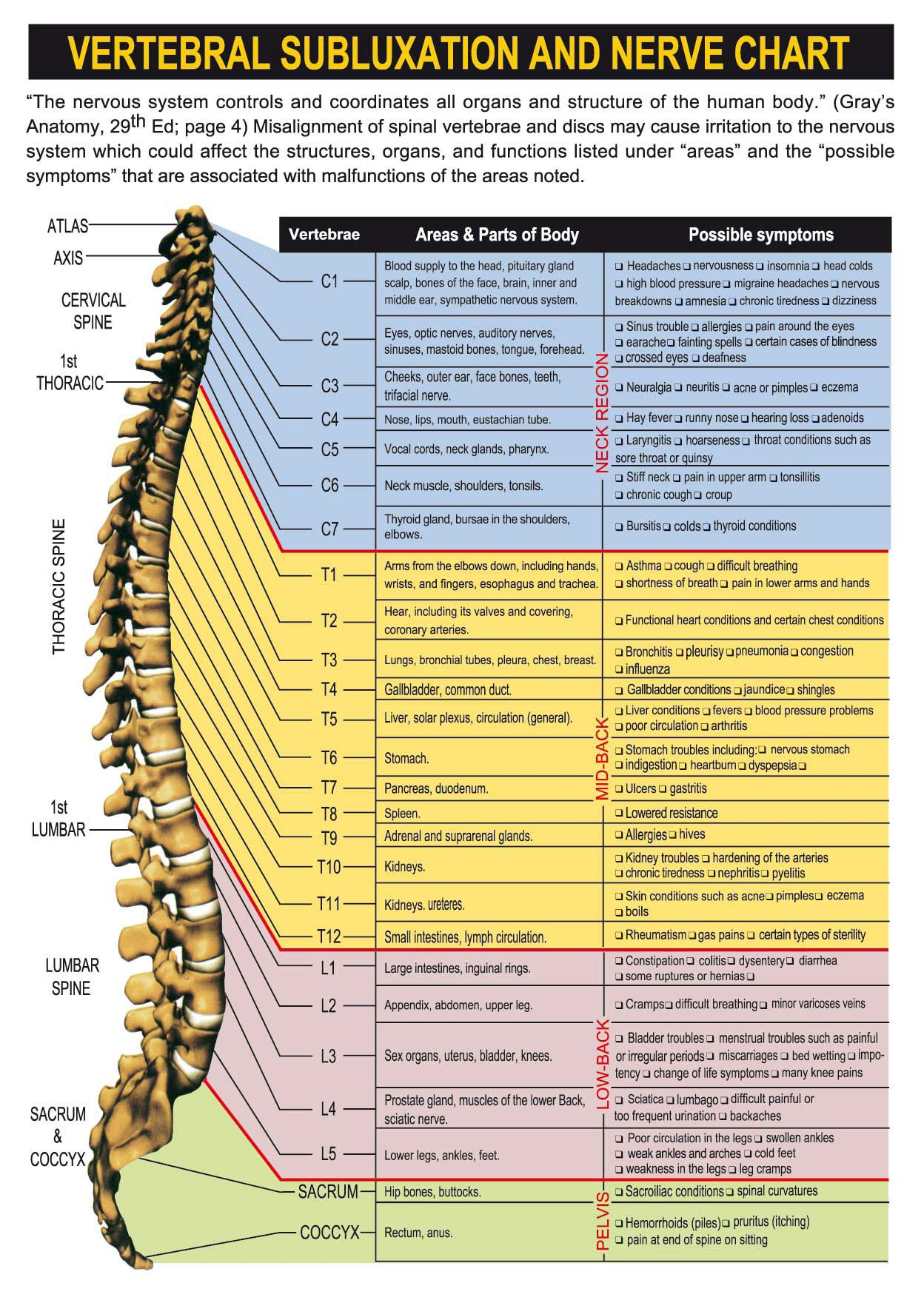 typical thoracic vertebrae diagram 2003 chevy malibu engine spinal nerve chart with effects of vertebral subluxations