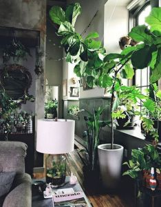 La impresionante decoracion de hilton carter house plants decorplant decor interior also home and garden rh pinterest