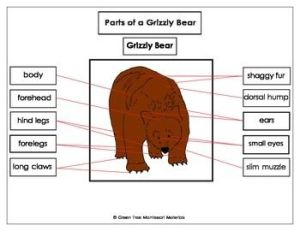 Printables: Label the parts of a Grizzly Bear | Homeschool