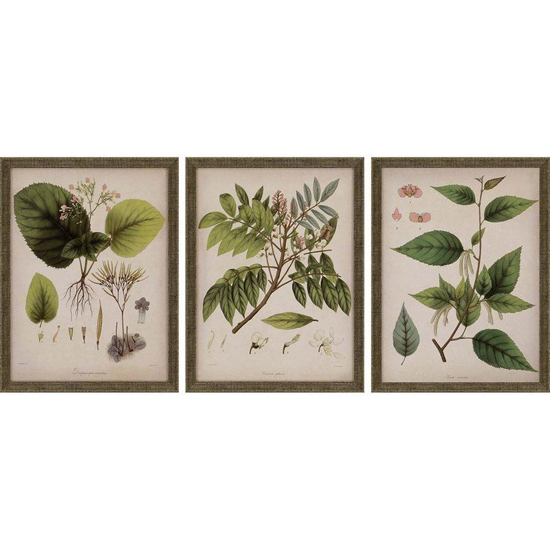 plants  by mendez piece wall art set joss main also for the rh pinterest