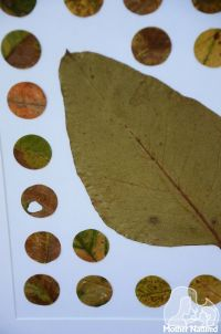 DIY Leaf Wall Art. So simple! | NATURE DECOR FOR HOME ...