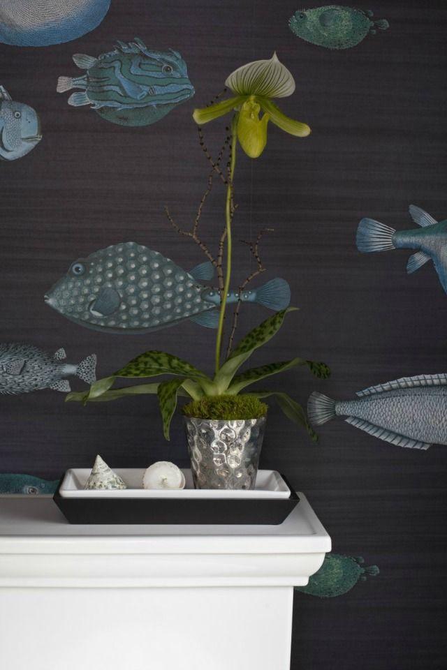 Best 25 Fish wallpaper ideas on Pinterest  Bathroom wallpaper fish Bathroom wallpaper fish