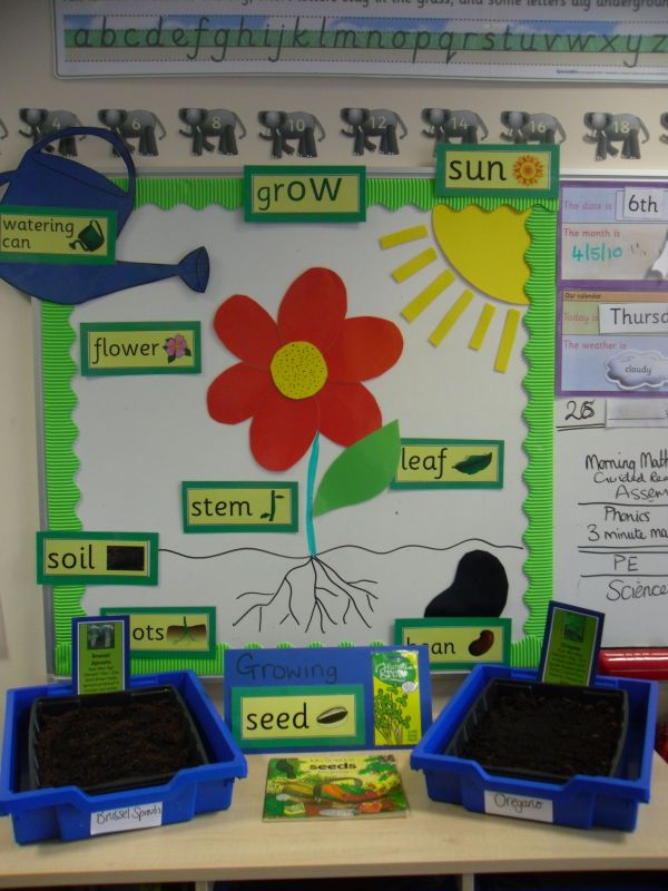 Plants Science Bulletin Board