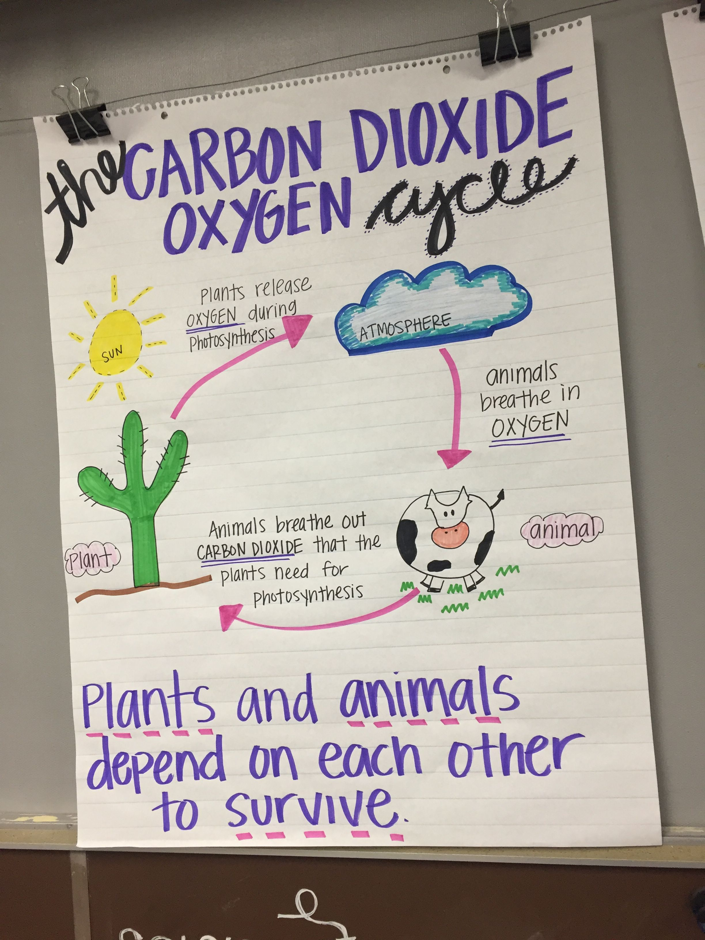 Carbon Dioxide Amp Oxygen Cycle Anchor Chart