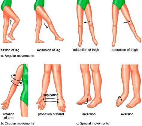 movements allowed by synovial joints diagram heating element wiring what is range of motion (rom) in joints? - yoga bloom