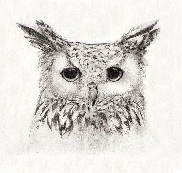 """White Eagle Owl Print 8""""x10"""". 15.00 Owls"""